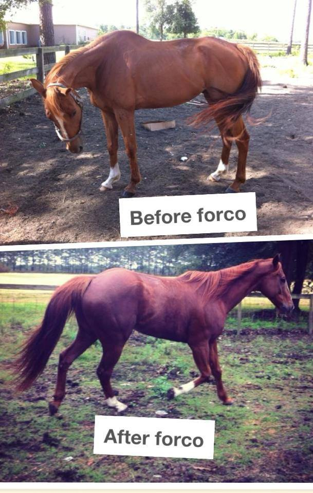 forco-horse-feed-supplement-testimonial
